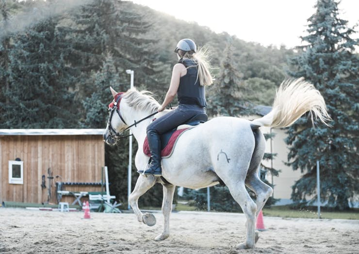Where To Go Horse Riding in Sydney