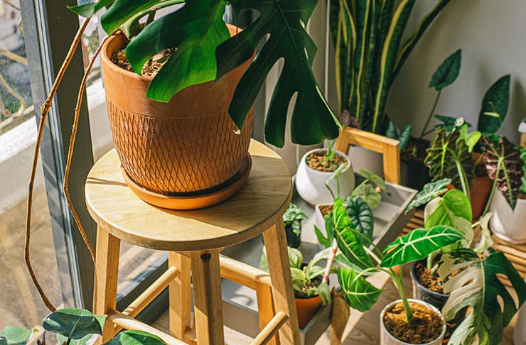 An array of potted indoor plants beside a sunny window.