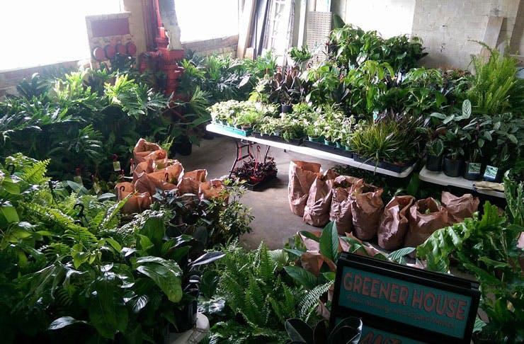 indoor-plant-sale-melbourne