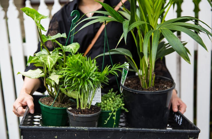 indoor-plant-sales-melbourne