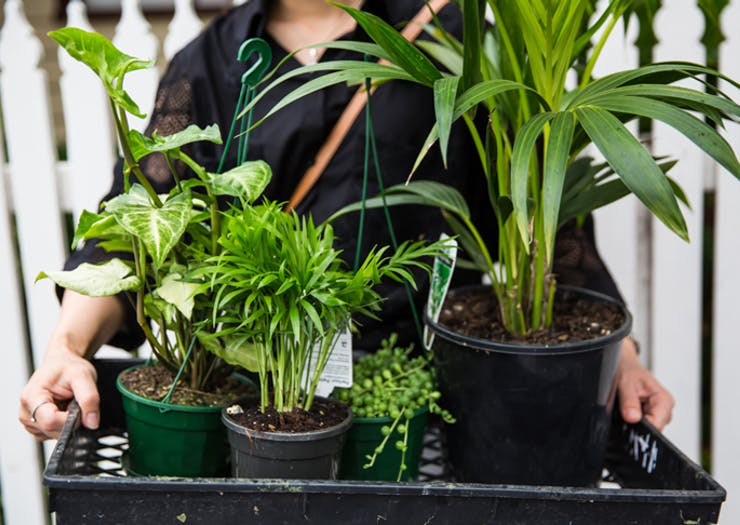 Here Are All The Plant Sales You Need To Head To This Weekend