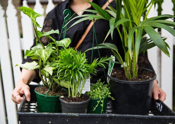 indoor-plant-sales-melbourne