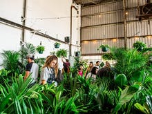There's A Huge Warehouse Plant Sale On This Weekend