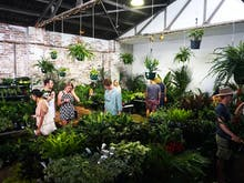 A Huge Indoor Plant Warehouse Sale Is Coming To Perth