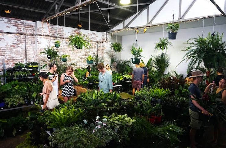 A Huge Indoor Plant Warehouse Sale Is Coming To Perth | Perth | The House Plants For Sale Perth on house plants design, house plants books, house plants outdoors, house plants food, house plants house, house plants that clean the air, house plants flowers, house plants low light, house plants guide, house plants dogs, house plants gifts, house plants pets, house plants care, house plants with long green leaves, house plants blog,