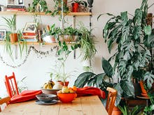 Give Your Home A Green Glow Up With These 8 Plant Delivery Services