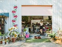 Where To Buy Indoor Plants On The Sunshine Coast