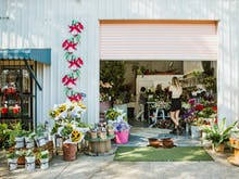 Go Green! Where To Buy Indoor Plants On The Sunshine Coast