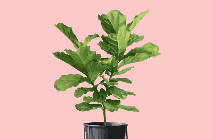 How To Look After Indoor Plants