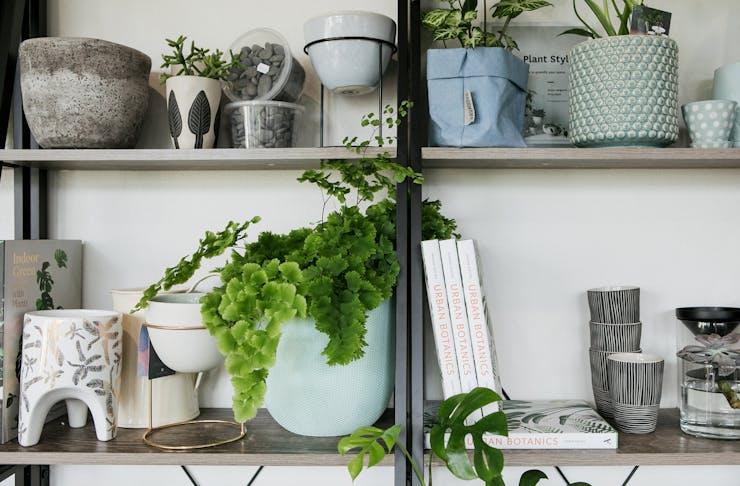 indoor plants sunshine coast