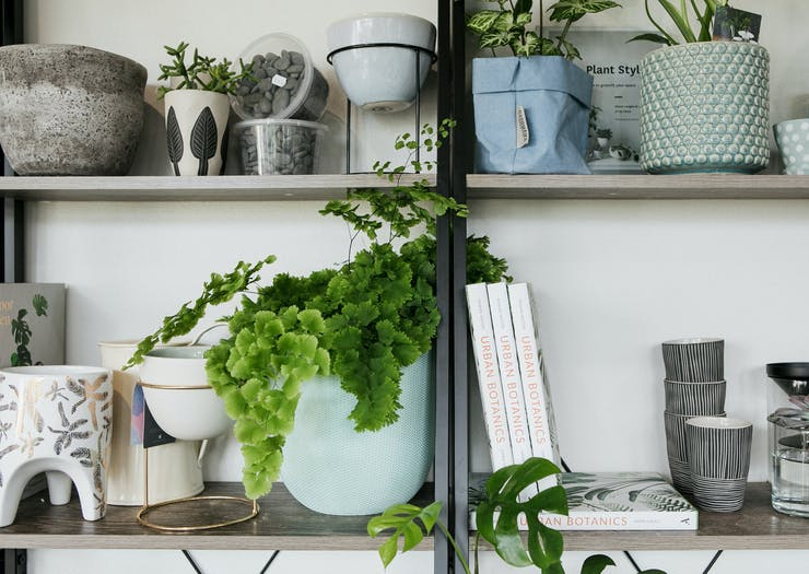 Feed Your Greenery Obsession With 7 Of The Best Places To Buy Indoor Plants