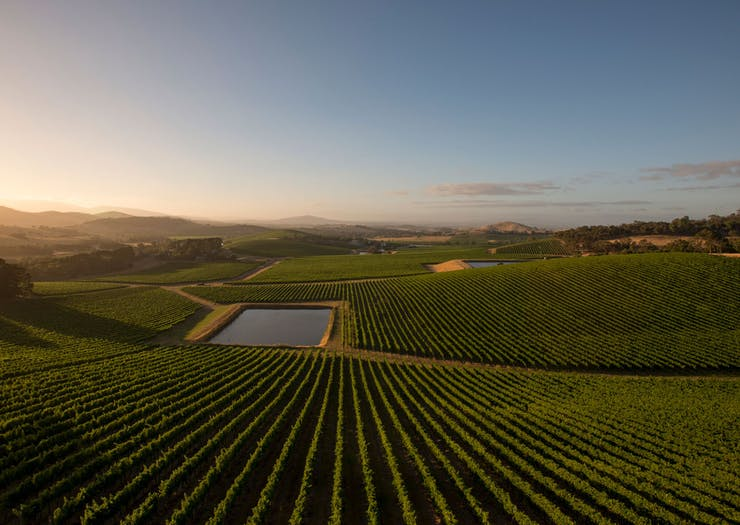 Explore The Finer Points Of Victoria's Premier Wine Region With This Three-Day Retreat