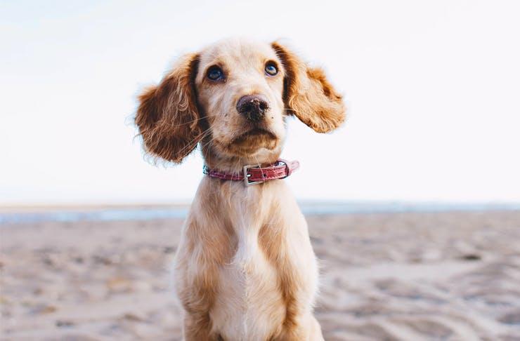 island-puppy-cuddles