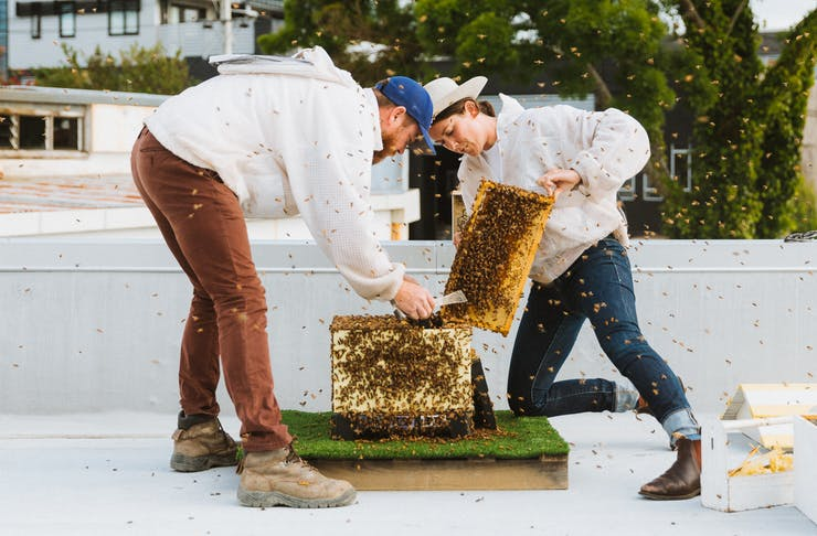 Jessie and Luke from Bees Up Top look after a hive with nary a beekeepers outfit to be seen.