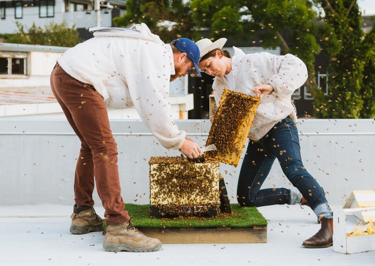 How These Kiwi Urban Warriors Are Safeguarding Bees For Our Future