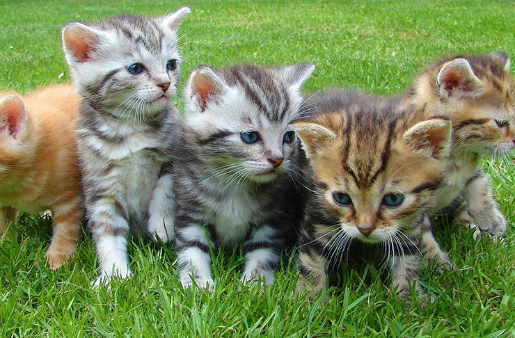 adopt-pets-sunshine-coast