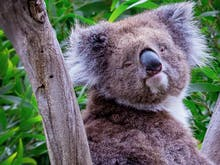 Put Our Furry Friends First With The Best Ethical Animal Experiences Around Australia
