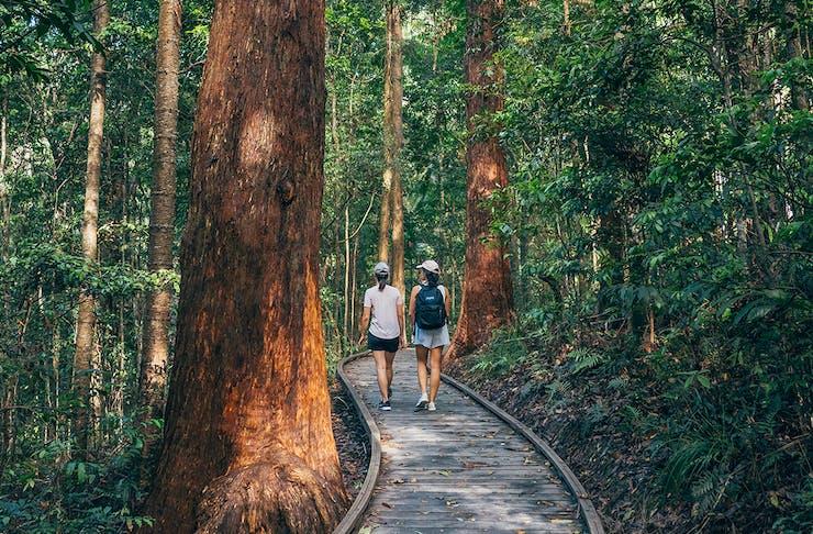 Two women walk along a raised boardwalk through a forest.