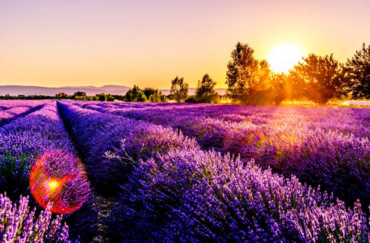 You Can Now Run Through A Field Of Lavender