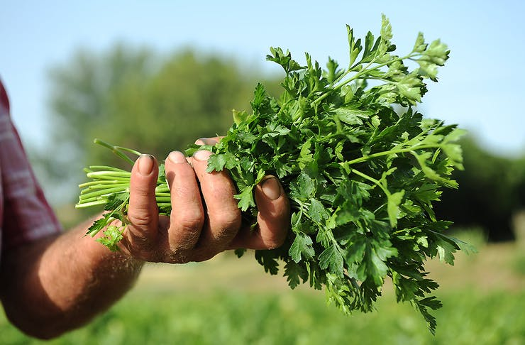 A man holds a handful of delicious looking spring greens in his hand.