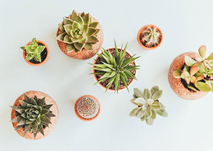 On Demand Succulent Delivery Is Now Available In Melbourne