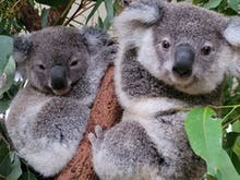 Get A Selfie With A Koala And Feed Friendly Kangaroos At This Animal Sanctuary