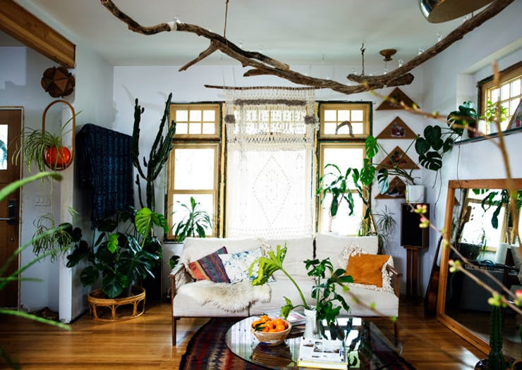 Here's How To Grow An Insta-Worthy Jungle In Your Low Light Apartment