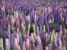 Where To Find New Zealand's Most Beautiful Wildflowers