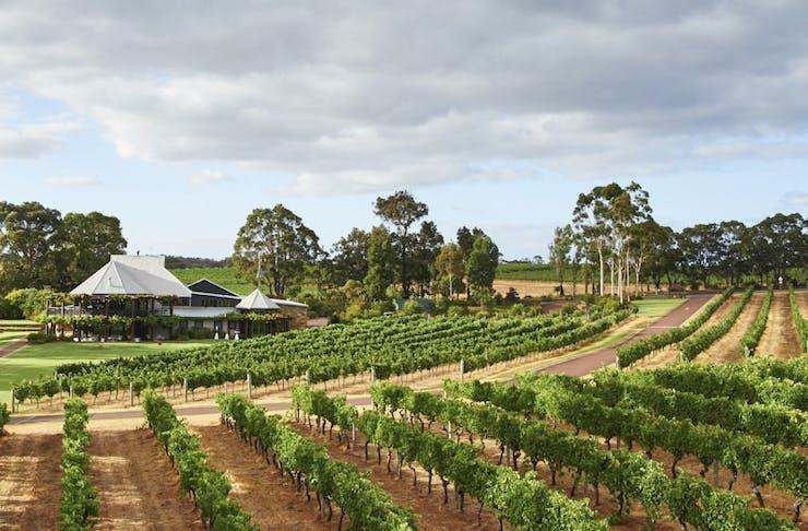 Best Margaret River Wineries