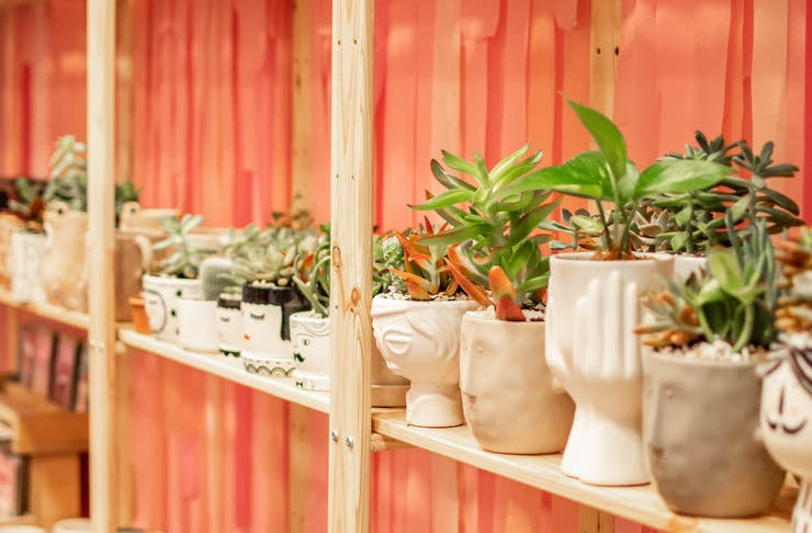Pot plants on display at The Market Hub
