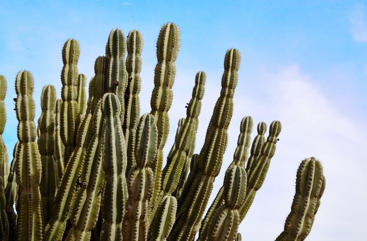melbourne-central-cactus-carnival