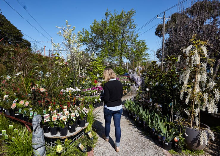 Melbourne's Best Nurseries