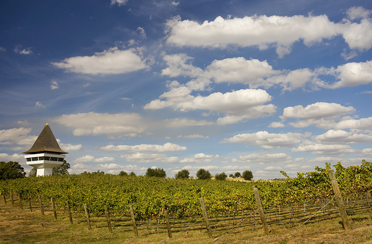 A vineyard with blue skies and a white tower in the background.