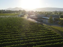 Bliss Out At Rochford Winery's Live Music Series Happening At The End Of This Month