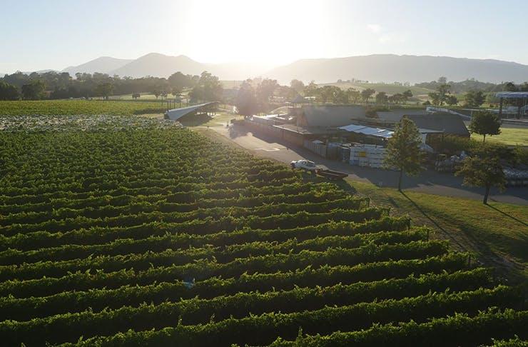 The sun shining over Rochford Winery