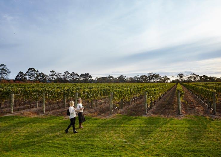 mornington peninsula winery