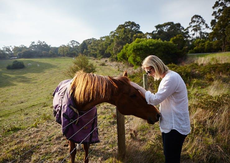 mornington peninsula nature horses