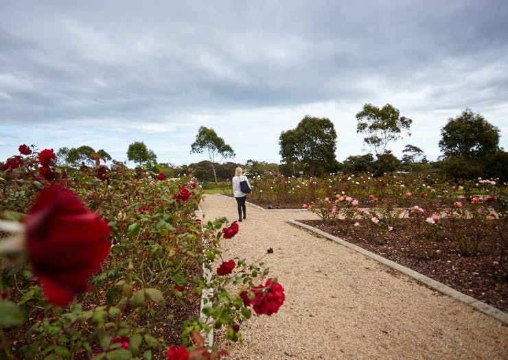 mornington peninsula nature rose garden
