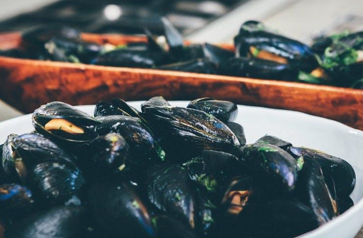 mussel festival gold coast