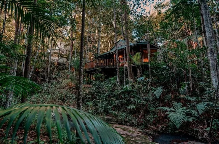 a cabin surrounded by rainforest
