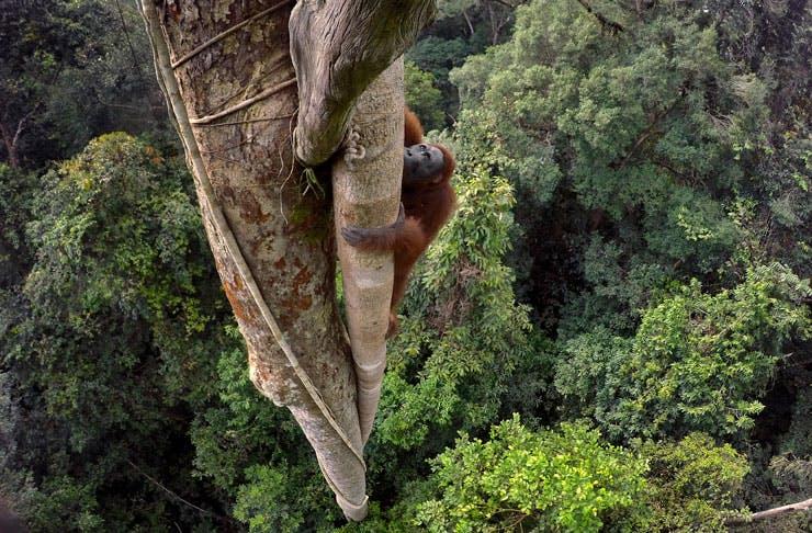 national-geographic-50-greatest-wildlife-photographs
