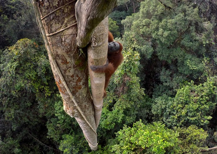 Nat Geo's 50 Greatest Wildlife Photographs Exhibition Is Coming To Melbourne In September