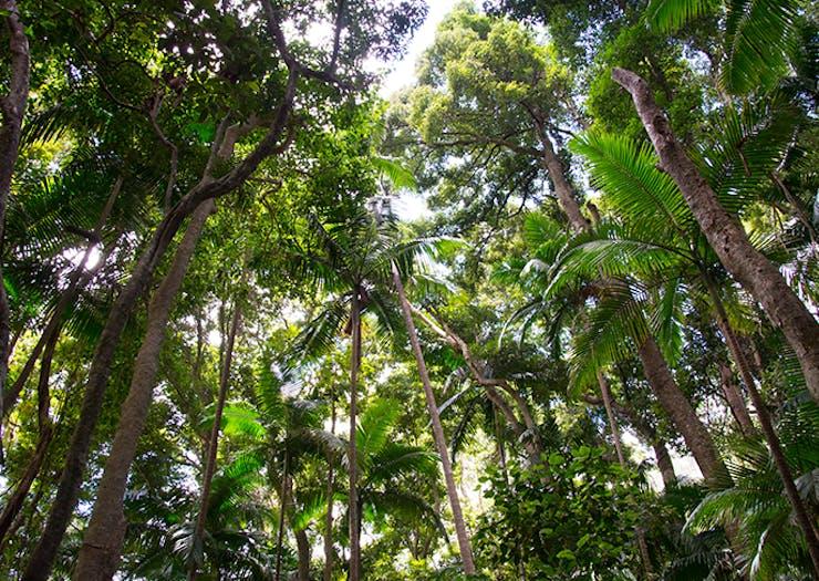 5 Stunning National Parks To Explore Around The Sunshine Coast