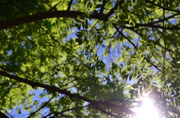 national tree day sydney
