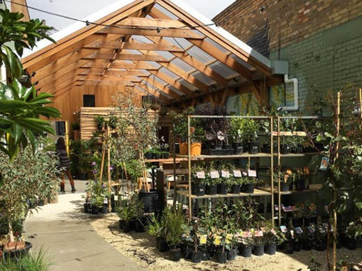 native-homes-house-of-plants