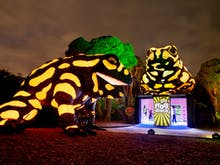 Melbourne Zoo Is Being Transformed Into A Neon Playground In April