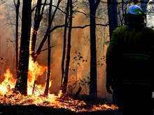 This Summer Has Already Been Catastrophic For Bushfires In NSW, Here's How You Can Help