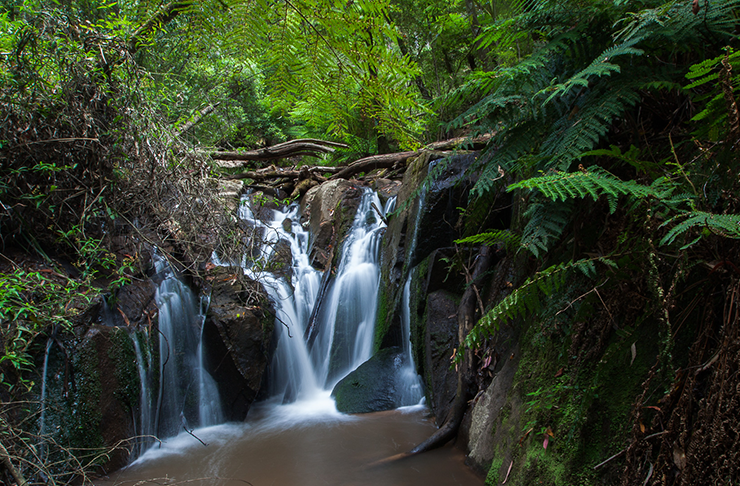 A gushing waterfall between old ferns.