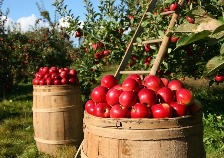 A Winter Cider Festival Is Popping Up In The Hills This Winter
