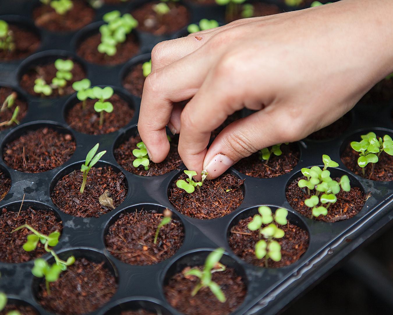 Organic farm seedlings.